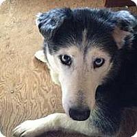 Adopt A Pet :: Alaska super URGENT - Sacramento, CA