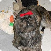 Adopt A Pet :: Sunnie - Lockhart, TX
