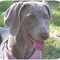 Adopt A Pet :: Chloey  **ADOPTED** - Eustis, FL