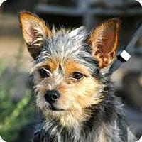 Adopt A Pet :: Buck - Austin, TX
