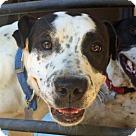 Adopt A Pet :: Bonnie Belle