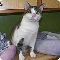 Adopt A Pet :: Wade - Dover, OH