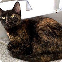 Adopt A Pet :: TWINKLE TOES - Canfield, OH