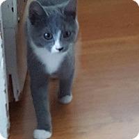 Adopt A Pet :: Lil Stinker - TRIAL ADOPTION - East Brunswick, NJ