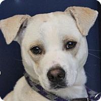 Adopt A Pet :: TUCKER - Red Bluff, CA
