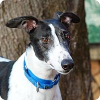 Adopt A Pet :: Richie - Ware, MA