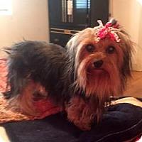 Adopt A Pet :: Gerdie - LE MESA, CA