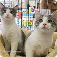 Adopt A Pet :: Phillip - Merrifield, VA
