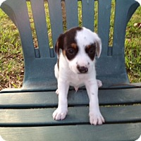 Adopt A Pet :: Peppercorn - Homestead, FL