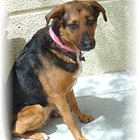 Adopt A Pet :: Reigan - Las Vegas, NV