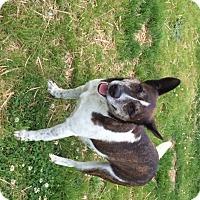 Adopt A Pet :: Aubie - Boston, MA