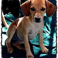 Adopt A Pet :: Neyya - Johnson City, TX