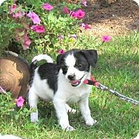 Adopt A Pet :: ASTER - Bedminster, NJ