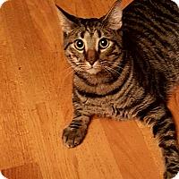 Adopt A Pet :: Tito Twizzlestick - Phoenix, AZ