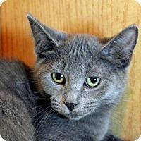 Adopt A Pet :: OneTwoChaChaCha - Troy, MI