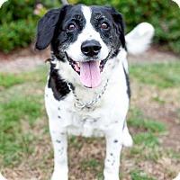 Adopt A Pet :: Kingston - San Diego, CA