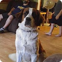 Adopt A Pet :: Livvy - Wyoming, MI