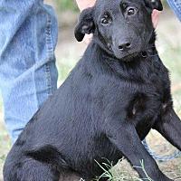 Adopt A Pet :: 5/20/16 Black sister - Magnolia, AR