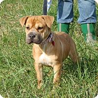 Adopt A Pet :: Angel - Cameron, MO