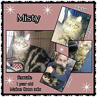Adopt A Pet :: Misty - Richmond, CA