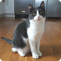 Adopt A Pet :: Sonny - Lombard, IL
