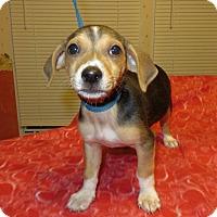 Adopt A Pet :: Trix - Plainfield, CT
