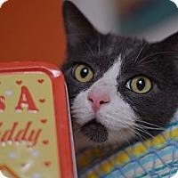 Adopt A Pet :: Tobey - Brooklyn, NY