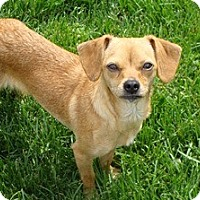 Adopt A Pet :: Swirly - Tustin, CA