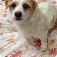 Adopt A Pet :: May May - Tumwater, WA
