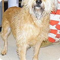 Adopt A Pet :: Maddie - Washington Court House, OH