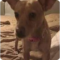 Adopt A Pet :: Pearl Hart - Phoenix, AZ
