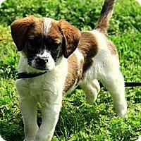Adopt A Pet :: Carrigan - Staunton, VA