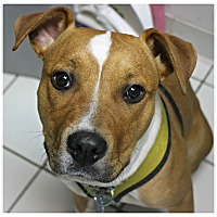 Adopt A Pet :: Penelope - Forked River, NJ