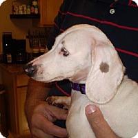Adopt A Pet :: Spot - Jacksonville, FL