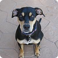 Adopt A Pet :: Katy - Conroe, TX