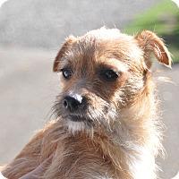 Adopt A Pet :: Emms - Tumwater, WA