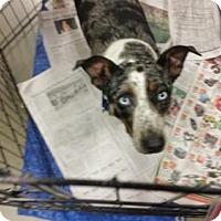 Adopt A Pet :: Liberty - Pembroke, GA