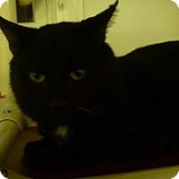 Adopt A Pet :: Ricky - Hamburg, NY