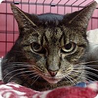 Adopt A Pet :: Gabriella - Winchendon, MA