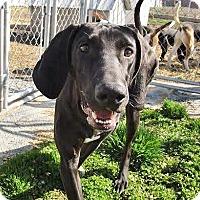 Adopt A Pet :: Gilligan - Liberty Center, OH