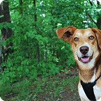 Adopt A Pet :: Yeager - New Castle, PA