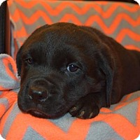 Adopt A Pet :: Justice - Mooresville, NC