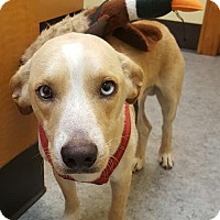 Whippet Mix Dog for adoption in Darlington, South Carolina - Sir Elton