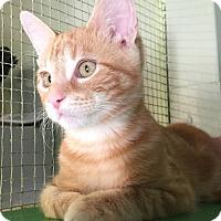 Adopt A Pet :: Pacho - Leander, TX