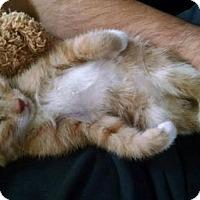 Adopt A Pet :: Kimmie - Hillside, IL