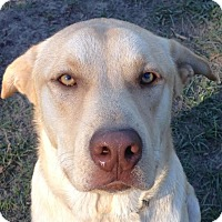 Adopt A Pet :: Peanut - Blountstown, FL