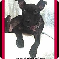 Adopt A Pet :: Bud Frazier - Memphis, TN