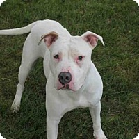 Adopt A Pet :: BINGO - Decatur, IL