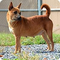 Adopt A Pet :: Nikki - Lincolnton, NC