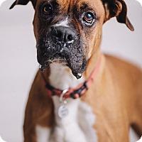 Adopt A Pet :: Stewart - Portland, OR